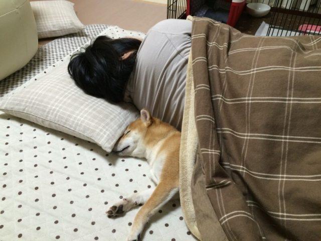 寝ている女性と犬